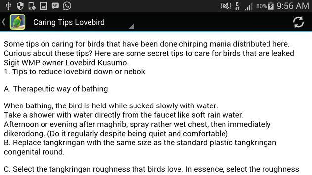 Sound of Lovebird screenshot 7