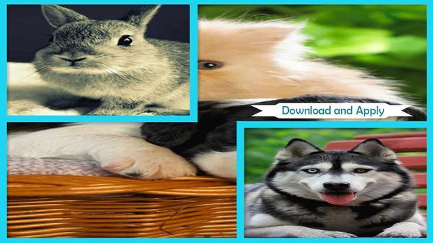 Cute Animals Live Wallpaper screenshot 1
