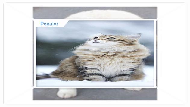 Cute Animals Live Wallpaper screenshot 2