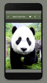 Cute Panda Wallpaper screenshot 1