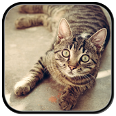 Cat Sounds: Kittens & Cats icon