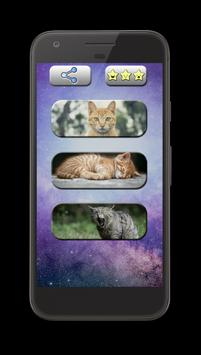 Cat Sounds: Kittens & Cats poster