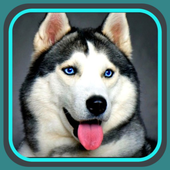 Сможешь угадать породу собак? icon