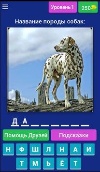 Сможешь угадать породу собак? poster