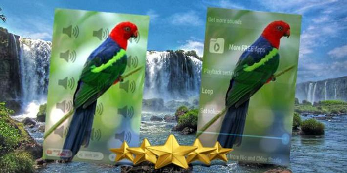 Parrot sound free download