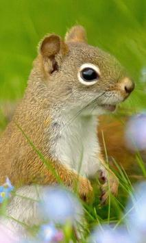 Funny Squirrel Jigsaw Puzzles apk screenshot
