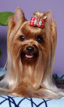 Yorkshire Terrier Images Jigsaw Puzzles screenshot 1