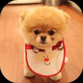 Cute Puppy Dogs - AllPuzzle icon