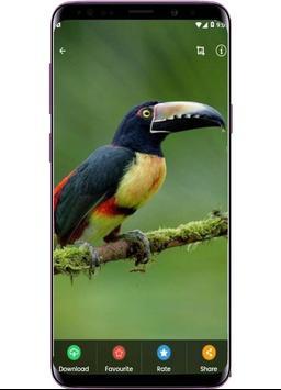 Bird Wallpapers - Full HD screenshot 3