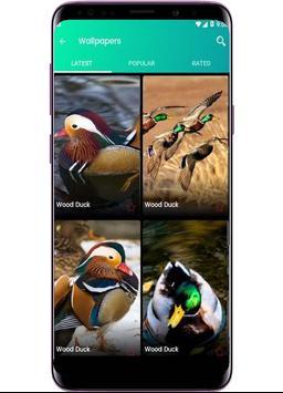 Bird Wallpapers - Full HD screenshot 1