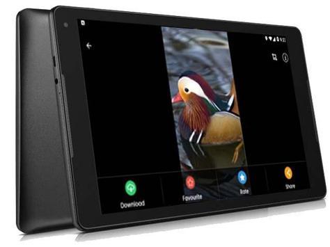 Bird Wallpapers - Full HD screenshot 5