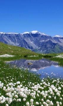 alpine meadows poster