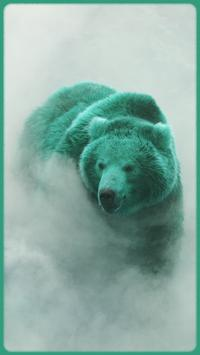 HD Colourful Bear Wallpapers apk screenshot