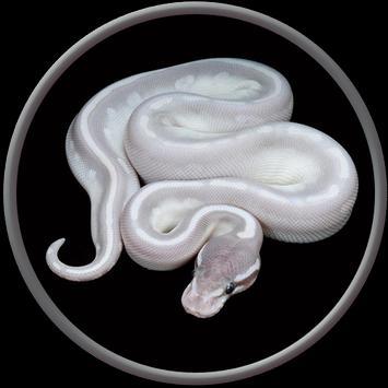 Pet Python Wallpaper HD apk screenshot