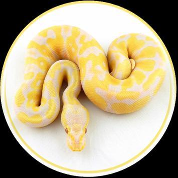 Pet Python Wallpaper HD poster
