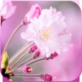 Blossom Sakura Wallpaper HD icon