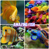 Amaing Fish icon