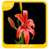 Lily Wallpapers icon