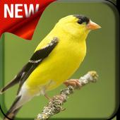 American Goldfinch Bird Songs icon