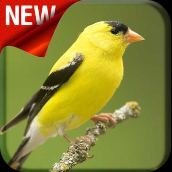 American Goldfinch Bird Songs poster