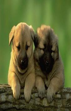 Imágenes de perros poster