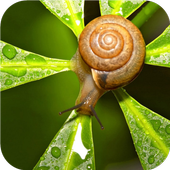 Nature.Snails.Live wallpaper icon