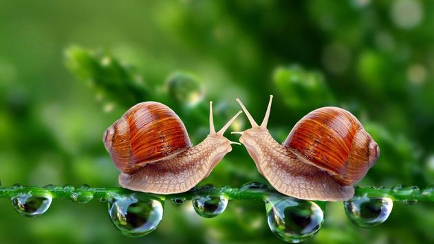 Nature.Snails.Live wallpaper screenshot 4