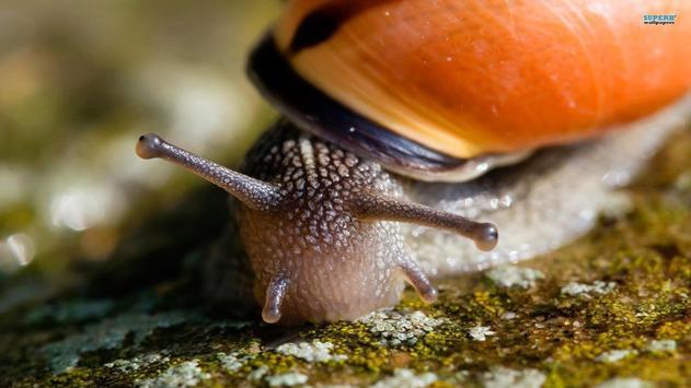 Nature.Snails.Live wallpaper screenshot 8