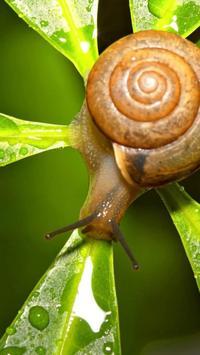 Nature.Snails.Live wallpaper poster