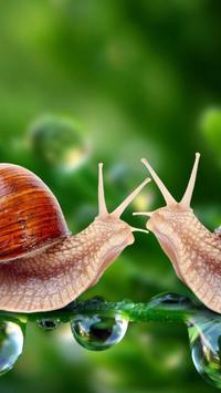 Nature.Snails.Live wallpaper screenshot 1