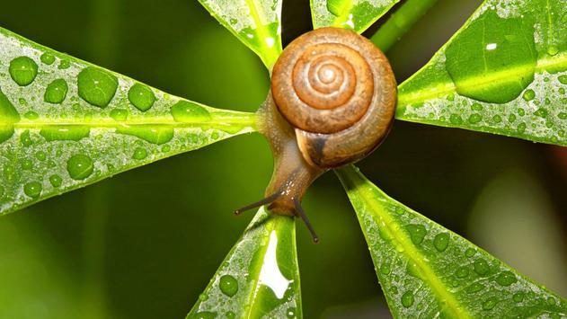 Nature.Snails.Live wallpaper screenshot 3