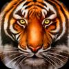 Wild Tiger Survival - Animal Simulator 아이콘
