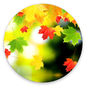 Falling Leaf Wallpaper icon