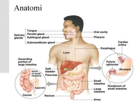 die Anatomie des menschlichen Körpers für Android - APK herunterladen