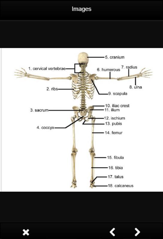 Anatomie und Physiologie Definition für Android - APK herunterladen