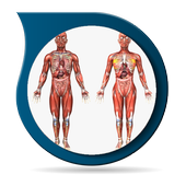 Anatomy 3D Pictures icon