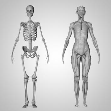 Anatomy 3D Pictures screenshot 3