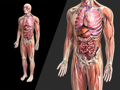 Anatomy 3D Pictures screenshot 1