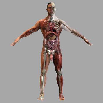Anatomy 3D Pictures screenshot 2