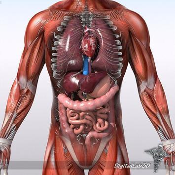 Anatomy 3D Pictures screenshot 4
