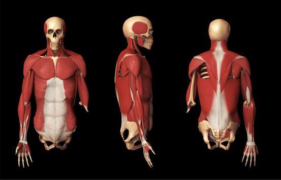 Anatomy 3D Pictures screenshot 5
