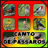 Canto de Passaros Brasil HD icon