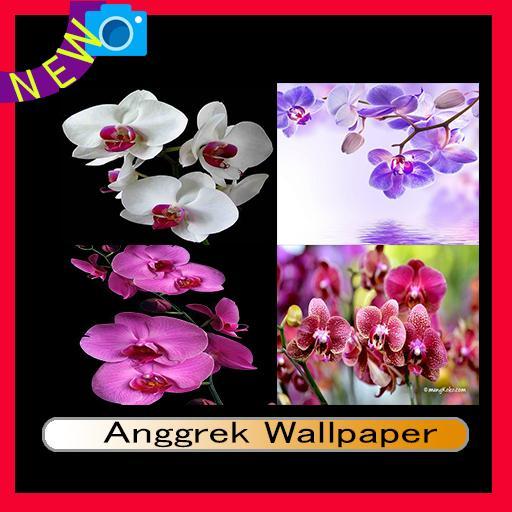 Orchidee Wallpaper 2018 Fur Android Apk Herunterladen