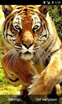 Tiger Waves Live Wallpaper screenshot 1