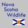Nova Scotia Wildlife icon