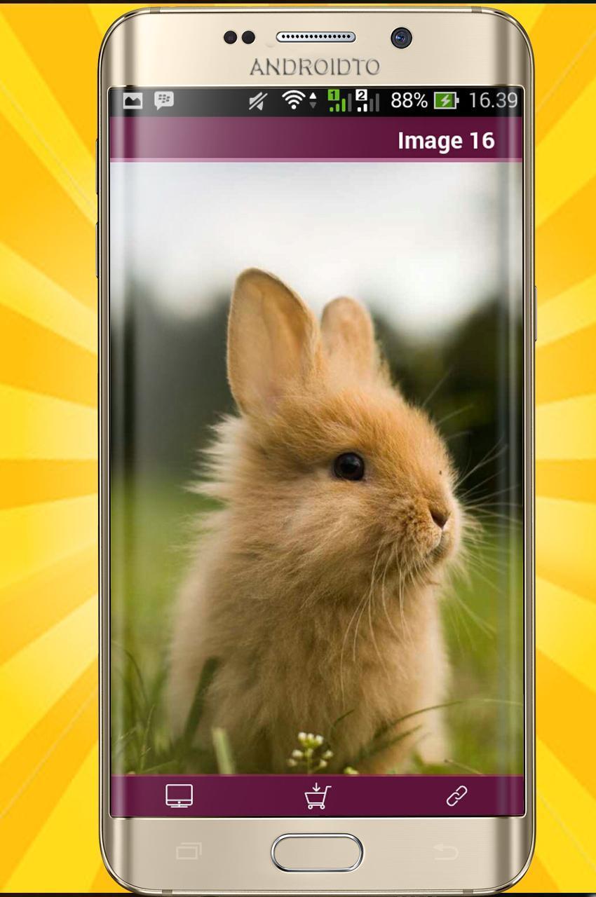 Android 用の かわいい動物の壁紙8k Apk をダウンロード