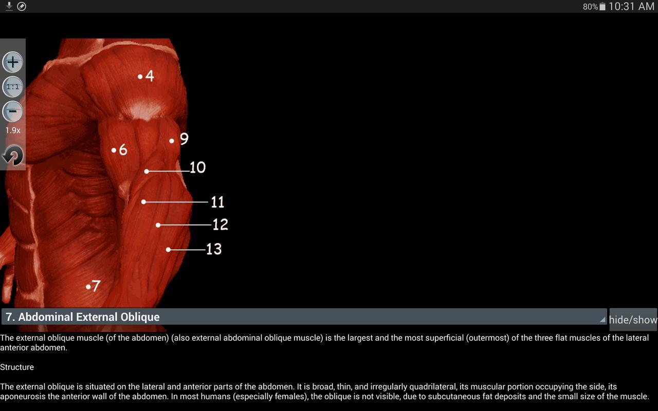 Asombroso Anatomía Aplicaciones Gratis Ornamento - Imágenes de ...