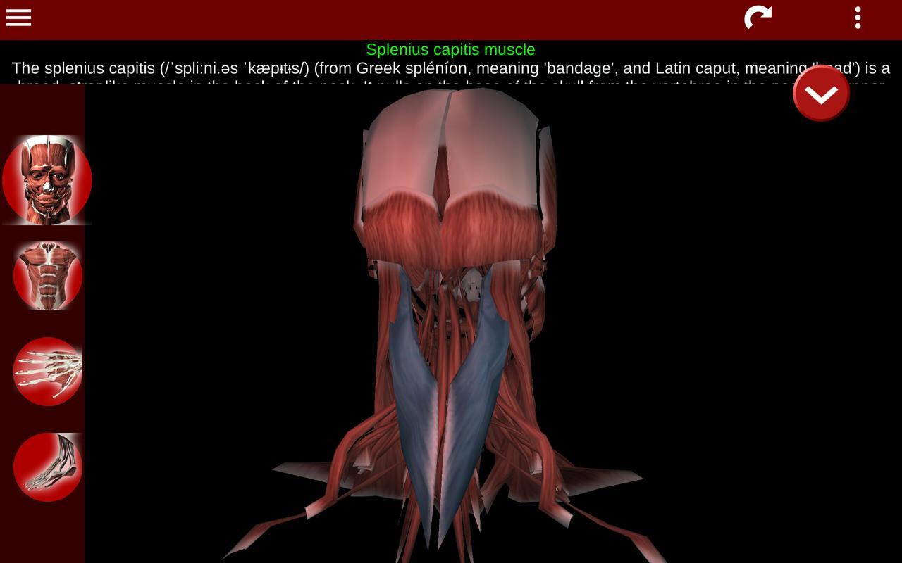 Muscular System 3D (anatomy) APK تحميل - مجاني طبي تطبيق لأندرويد ...