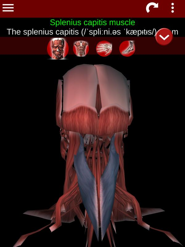 Muscular System 3d Anatomy Apk Download Free Medical App For