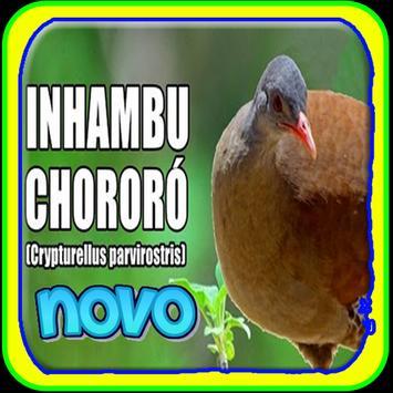 Novo inhambu chororo poster